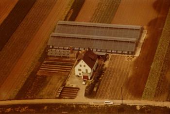 1965_Gewächshausbau1