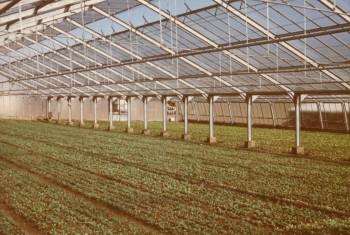 1965_Gewächshausbau2