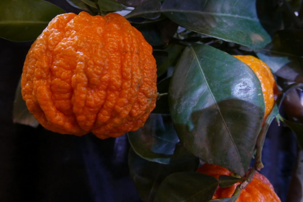 bitter orangen marmelade